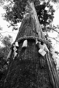 鞍馬寺散策と撮影後のくらま温泉へ(10月17日) @ 鞍馬寺 | 京都市 | 京都府 | 日本