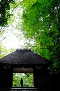 初夏を楽しもう! 哲学の道 周辺 散策撮影会(6月20日) @ 哲学の道 周辺 | 京都市 | 京都府 | 日本