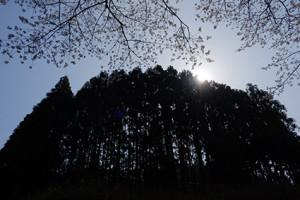 周山街道を行く 桜の山里 散策撮影会(4月9日) @ 京都市 | 京都府 | 日本