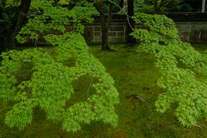 初夏を楽しもう! 洛北 鷹ヶ峯周辺 散策撮影会(6月10日) @ 鷹ヶ峯周辺 | 京都市 | 京都府 | 日本