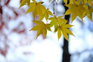 紅葉鮮やかな嵐山周辺散策撮影会(11月26日) @ 京都市 | 京都府 | 日本