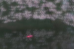 桜をPhotoshopで加工する 京都御苑 散策撮影会(3月29日) @ 京都市 | 京都府 | 日本