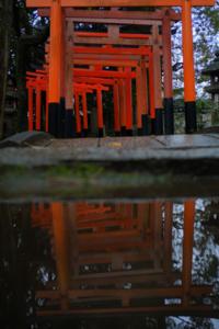 初秋の鴨川沿い散策撮影会(10月20日) @ 鴨川沿い | 京都市 | 京都府 | 日本