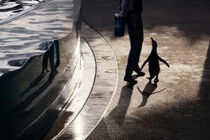 都七福神まいり 東寺から京都水族館へ 散策 撮影会 1月22日 京都 @ 京都市 | 京都府 | 日本
