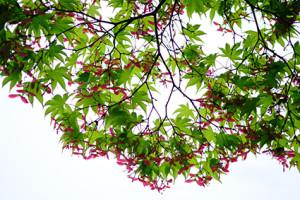 ゆったり5名 風情満喫 嵯峨嵐山周辺 散策撮影会 6月7日 京都 @ 京都市 | 京都府 | 日本