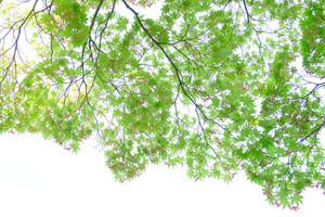 新緑の北嵯峨散策 撮影会(4月14日) 京都 @ 京都市 | 京都府 | 日本
