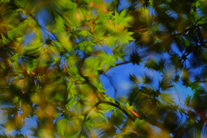 ゆったり5名 風情満喫 嵯峨嵐山周辺 散策撮影会 6月10日 京都 @ 京都市 | 京都府 | 日本