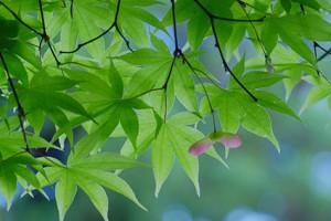 新緑の北嵯峨散策 撮影会(4月17日) 京都 @ 京都市 | 京都府 | 日本