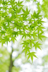 新緑の一乗寺 散策撮影会(4月15日) @ 京都市 | 京都府 | 日本