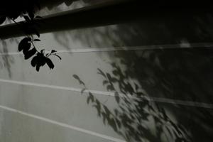 冬の山寺 神護寺 周辺 散策 撮影会  1月28日 京都 @ 京都市 | 京都府 | 日本