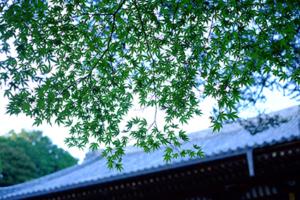 新緑の神護寺周辺 散策撮影会  4月26日 京都 @ 京都市 | 京都府 | 日本