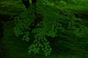 ゆったり5名 ゆっくり三千院から夕刻の出町柳 散策撮影会 8月26日 京都 @ 京都市 | 京都府 | 日本