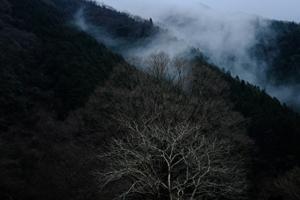 冬の三千院でゆったりと 散策 撮影会 2月6日 京都 @ 京都市 | 京都府 | 日本