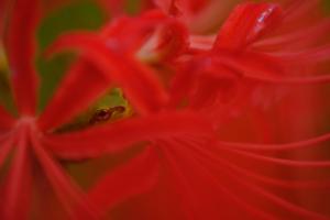 彼岸花を求めて 大原の里 散策 撮影会 (9月22日) 京都 @ 京都市 | 京都府 | 日本