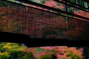 赤山禅院から圓光寺まで一日満喫!! 散策撮影会(11月14日) @ 京都市 | 京都府 | 日本