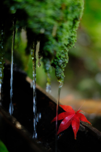 紅葉鮮やかな嵐山周辺散策撮影会(11月23日) @ 京都市 | 京都府 | 日本
