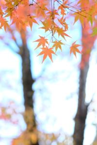 古都の風情満喫 東山周辺散策撮影会(11月25日) @ 京都市 | 京都府 | 日本