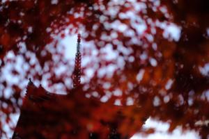 古都の風情満喫 東山周辺散策撮影会(11月28日) @ 京都市 | 京都府 | 日本