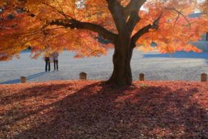 秋の余韻! 京都御苑をゆっくり散策 撮影会  12月3日 京都 @ 京都市 | 京都府 | 日本