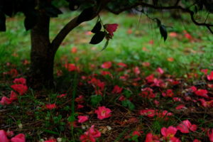 春の鴨川沿いから京都御苑へ 散策撮影会(3月23日) 京都 @ 京都市 | 京都府 | 日本