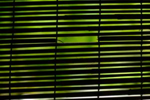 ゆったり5名 緑映える 圓光寺 じっくり 散策撮影会 6月20日 京都 @ 京都市 | 京都府 | 日本