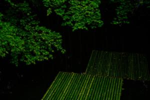 ゆったり5名 緑映える 圓光寺 じっくり 散策撮影会 6月24日 京都 @ 京都市 | 京都府 | 日本