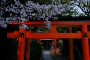 古都の桜 満喫します! 東山方面散策 撮影会(4月2日) 京都 @ 京都市 | 京都府 | 日本