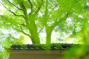 修学院周辺 散策撮影会  6月5日 京都 @ 京都市 | 京都府 | 日本