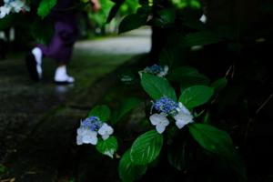 洛北 鷹峯周辺 散策 撮影会(6月9日) 京都 @ 京都市 | 京都府 | 日本