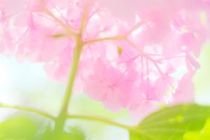 一日写真塾(哲学の道周辺散策+作品講評会) 6月15日 京都 @ 京都市 | 京都府 | 日本