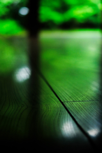 一日写真塾(法金剛院から京都御苑へ散策+作品講評会) 7月6日 京都 @ 京都市 | 京都府 | 日本
