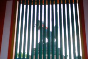 秋の散策 伏見稲荷大社 お山に登ろう 撮影会 10月31日 京都 @ 京都市 | 京都府 | 日本
