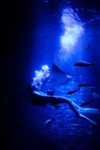 夜の水族館と京の七夕イルミネーション 散策 撮影会(8月7日) 京都 @ 京都市 | 京都府 | 日本