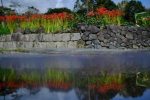 彼岸花を求めて 北嵯峨 散策 撮影会 (9月20日) 京都 @ 京都市 | 京都府 | 日本