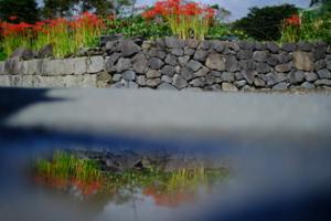 彼岸花を求めて 北嵯峨 周辺 散策撮影会 9月20日 京都 @ 京都市 | 京都府 | 日本