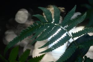 晩秋の大山崎山荘周辺 散策撮影会(12月8日) @ 大山崎山荘周辺 | 京都市 | 京都府 | 日本