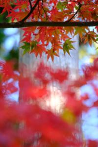 赤山禅院から圓光寺へ一日満喫 散策 撮影会  (11月7日) 京都 @ 京都市 | 京都府 | 日本