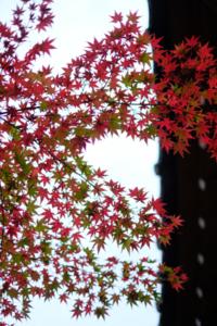夕刻の斜光 ゆったりと圓光寺 散策 撮影会  (11月10日) 京都 @ 京都市 | 京都府 | 日本