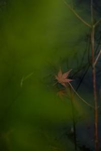 作品研究会 7月の花まる写真教室(7月27日) @ 塩見税理士事務所 会議室 | 京都市 | 京都府 | 日本