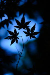 新京極八社寺詣り 散策撮影会(1月23日) @ 京都市   京都府   日本