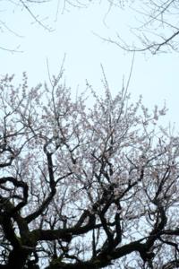 作品研究会 6月の花まる写真教室(6月22日) @ 塩見税理士事務所 会議室 | 京都市 | 京都府 | 日本