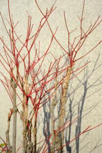作品研究会 5月の花まる写真教室(5月25日) @ 塩見税理士事務所 会議室 | 京都市 | 京都府 | 日本