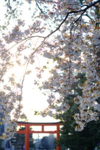 桜 見頃につき急遽企画 西陣周辺から東山方面(バス移動)へ散策 撮影会(4月6日) 京都 @ 京都市 | 京都府 | 日本