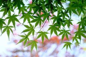 新緑の大山崎周辺 散策撮影会  4月18日 京都 @ 京都市   京都府   日本