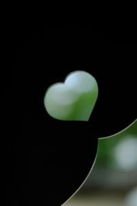春探し 伏見 周辺 散策 撮影会 3月16日 京都 @ 京都市 | 京都府 | 日本