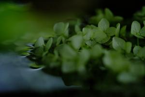 ゆったり5名 紫陽花のころ 哲学の道周辺 散策撮影会 6月14日 京都 @ 京都市 | 京都府 | 日本