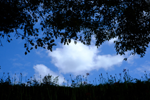 彼岸花を求めて 大原の里 散策撮影会 9月22日 京都 @ 京都市 | 京都府 | 日本