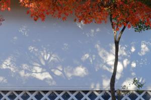 古都の錦秋を満喫 東山方面 散策撮影会 11月26日 京都 @ 京都市 | 京都府 | 日本