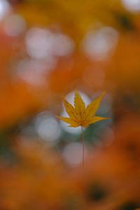 古都 秋の盛りを満喫 泉山 周辺 散策 撮影会 11月26日 京都 @ 京都市 | 京都府 | 日本