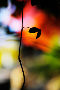 風情とバラエティー 大山崎周辺 散策 撮影会  11月28日 京都 @ 京都市 | 京都府 | 日本
